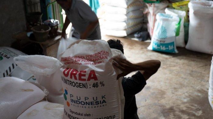 Alokasi Pupuk Bersubsidi di Sampang Meningkat